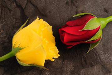 welche Farbe soll meine Rose haben?